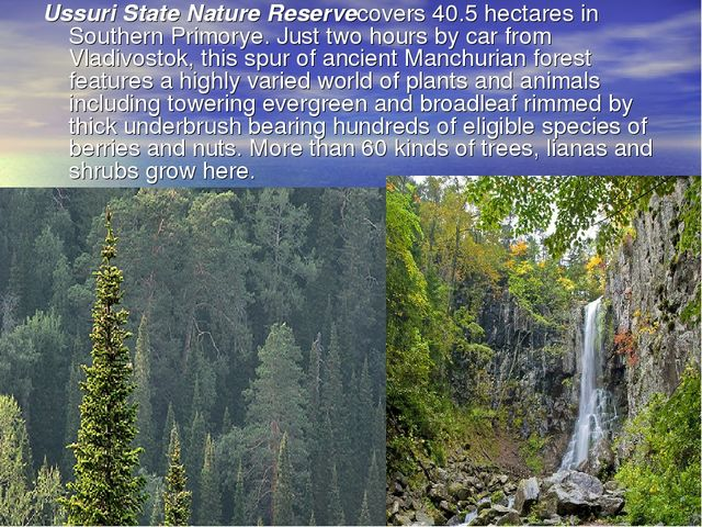 Ussuri State Nature Reservecovers 40.5 hectares in Southern Primorye. Just tw...