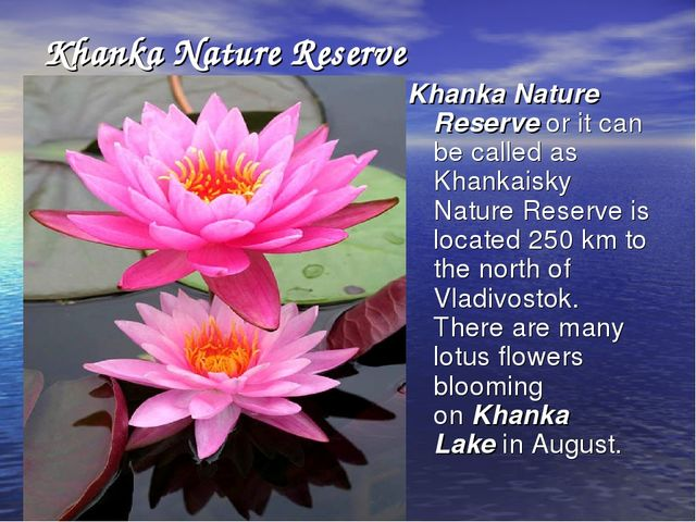 Khanka Nature Reserve Khanka Nature Reserve or it can be called as Khankaisky...