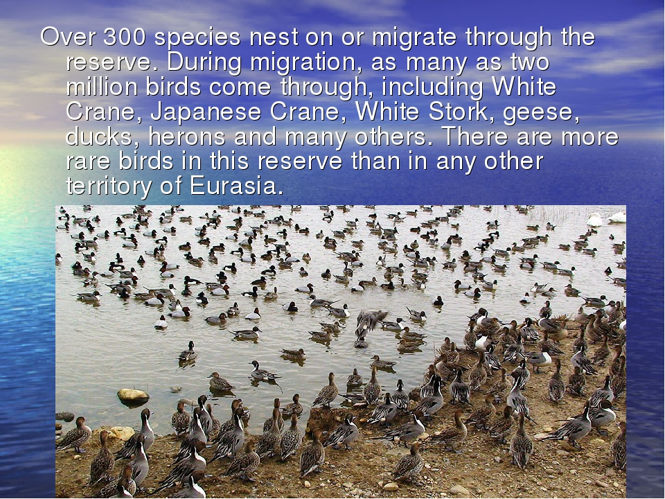 Over 300 species nest on or migrate through the reserve. During migration, as...