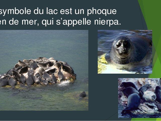 Le symbole du lac est un phoque chien de mer, qui s'appelle nierpa.