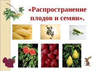 «Распространение плодов и семян».