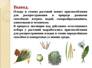 Вывод. Плоды и семена растений имеют приспособления для распространения в при