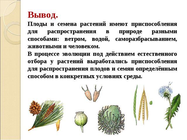 Вывод. Плоды и семена растений имеют приспособления для распространения в при...