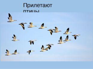 Прилетают птицы.