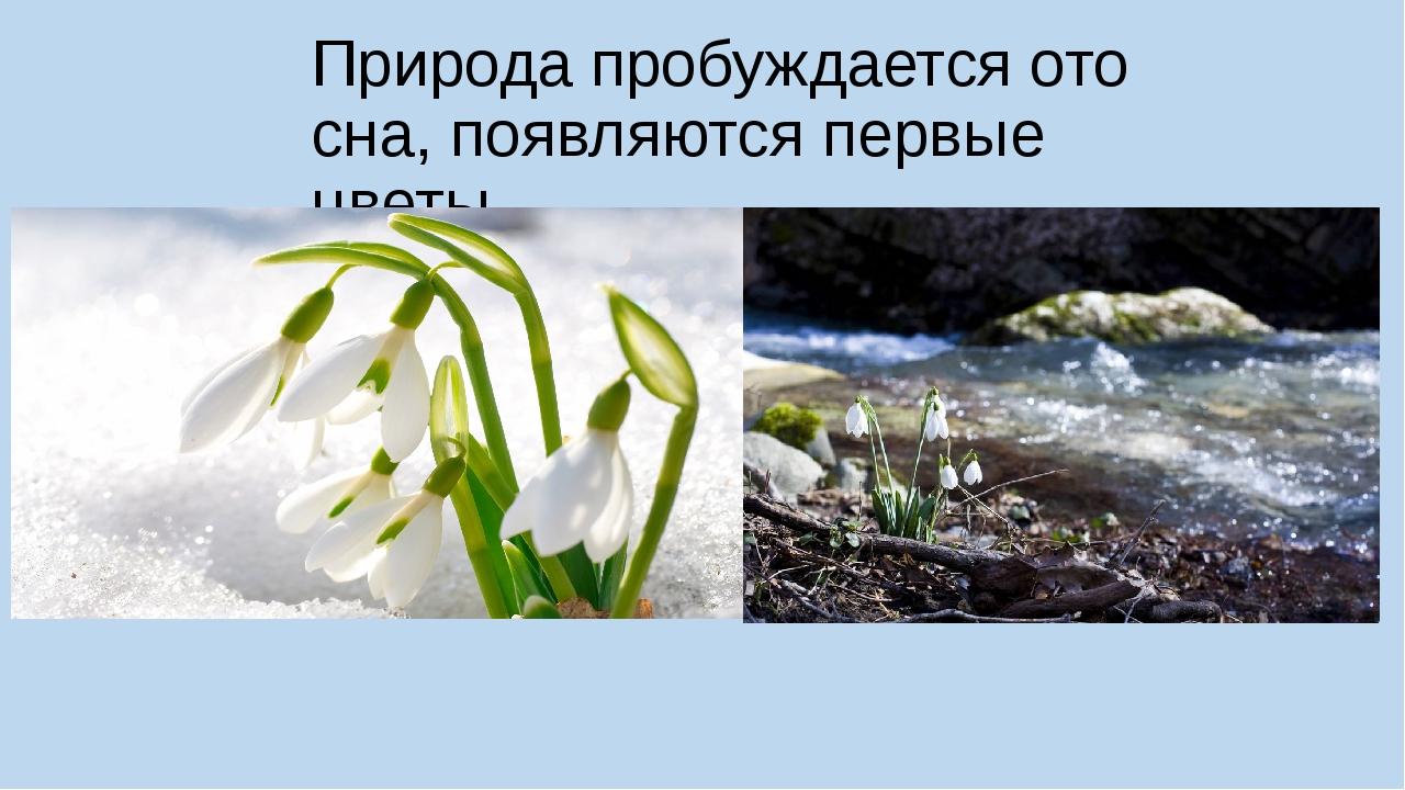 Природа пробуждается ото сна, появляются первые цветы.