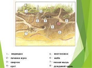 1 - 5 - 2 - 6 - 3 - 7 - 4 - 8 - медведка многоножка личинка жука жаба сверчок