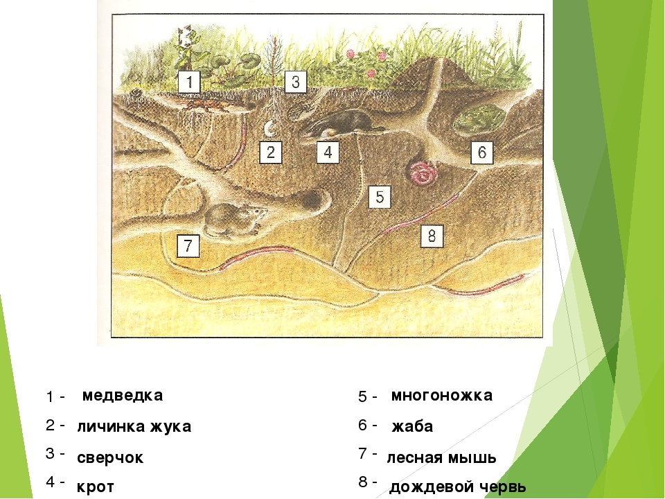 1 - 5 - 2 - 6 - 3 - 7 - 4 - 8 - медведка многоножка личинка жука жаба сверчок...
