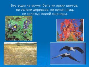 Без воды не может быть ни ярких цветов, ни зелени деревьев, ни пения птиц, ни