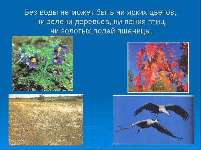 Без воды не может быть ни ярких цветов, ни зелени деревьев, ни пения птиц, ни...