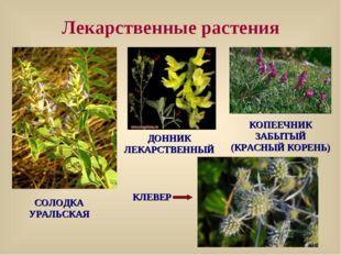 Лекарственные растения СОЛОДКА УРАЛЬСКАЯ КЛЕВЕР ДОННИК ЛЕКАРСТВЕННЫЙ КОПЕЕЧНИ