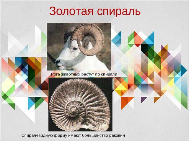 Золотая спираль Рога животных растут по спирали Спиралевидную форму имеют бол...