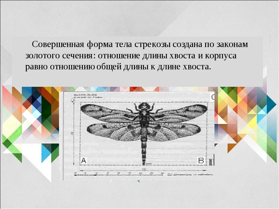 Совершенная форма тела стрекозы создана по законам золотого сечения: отношен...