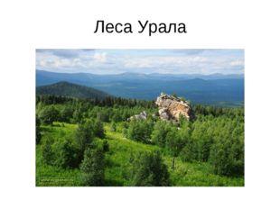 Леса Урала