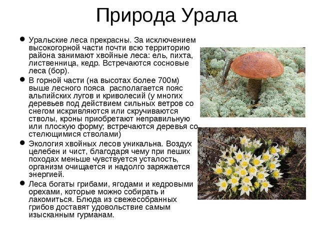 Природа Урала Уральские леса прекрасны. За исключением высокогорной части поч...