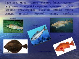Баренцево море - самое богатое биологическими ресурсами из морей Северного Л