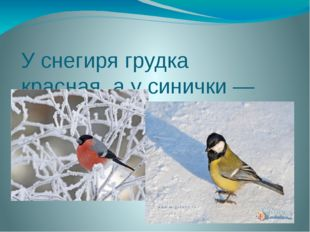У снегиря грудка красная, а у синички — какая?