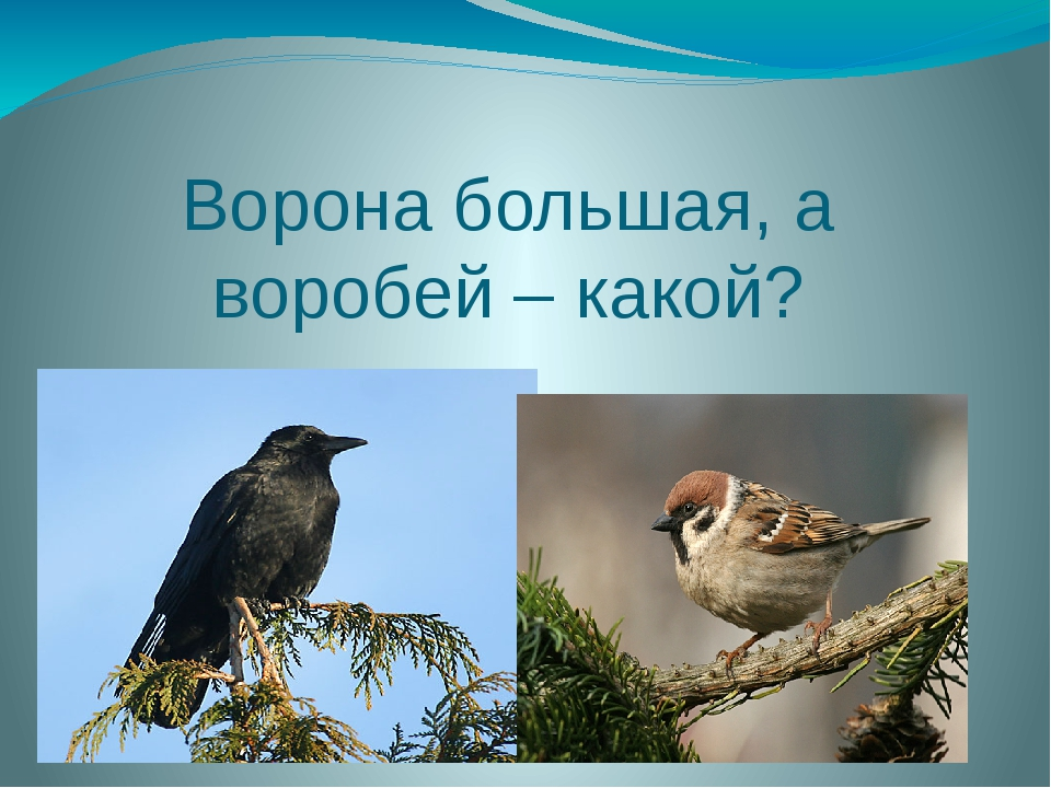 Ворона большая, а воробей – какой?