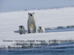 Великан Арктики – белый медведь – сутками бродит по снежной пустыне в поисках