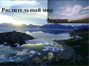 Арктики Растительный мир
