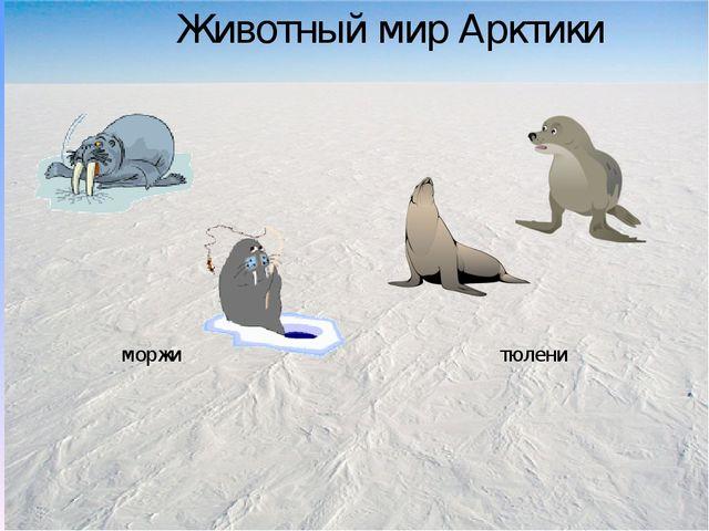 Животный мир Арктики моржи тюлени