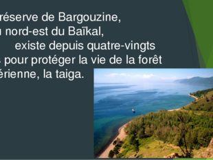La réserve de Bargouzine, au nord-est du Baïkal, existe depuis quatre-vingts
