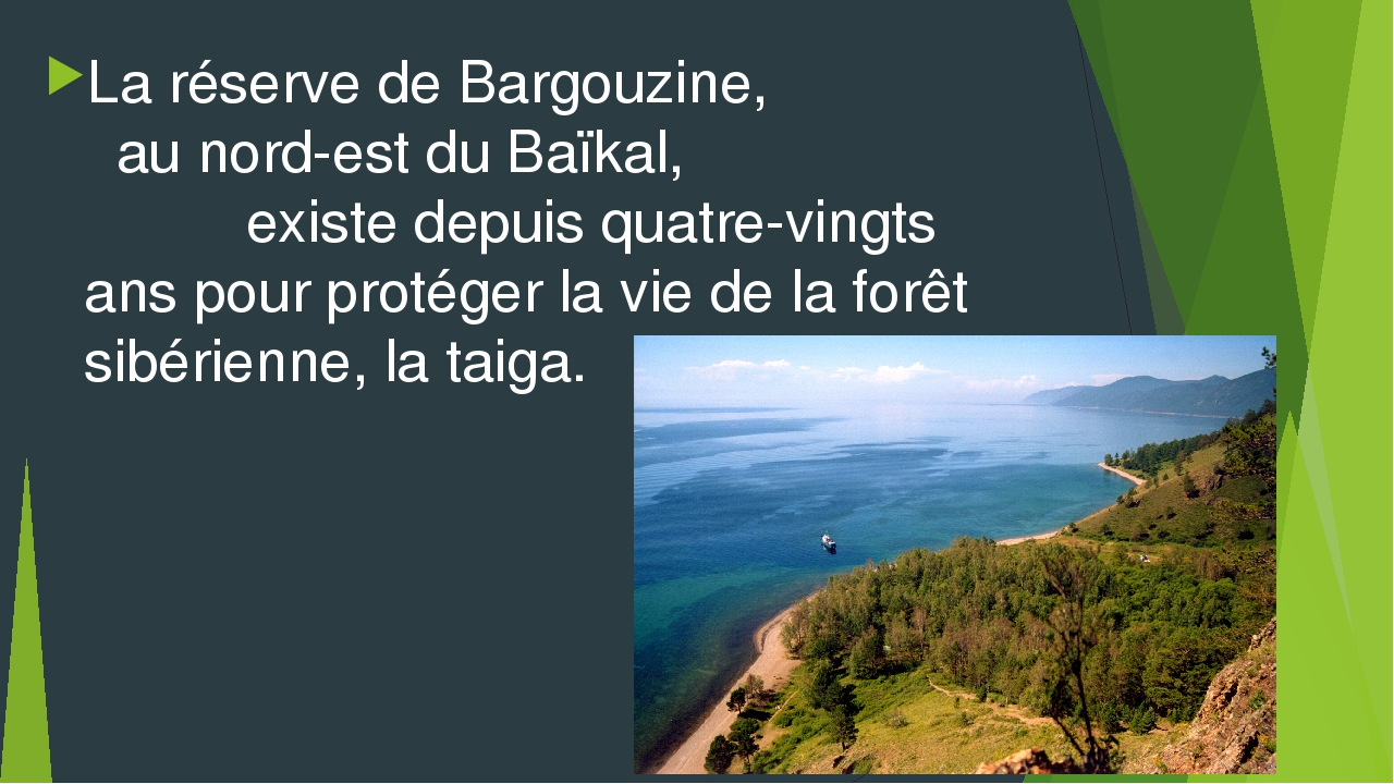 La réserve de Bargouzine, au nord-est du Baïkal, existe depuis quatre-vingts...