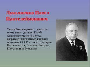 Ученый-селекционер известен всему миру, дважды Герой Социалистического Труда,
