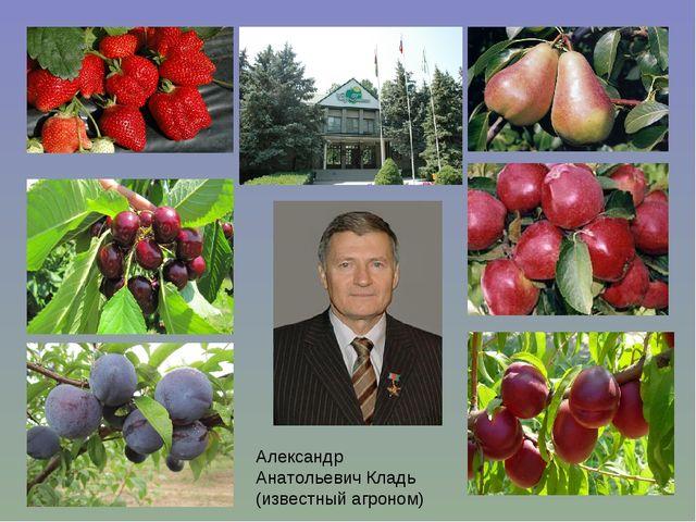 Александр Анатольевич Кладь (известный агроном)