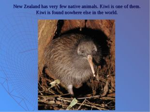 New Zealand has very few native animals. Kiwi is one of them. Kiwi is found