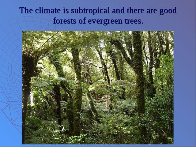 The climate is subtropical and there are good forests of evergreen trees.