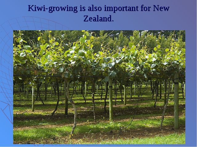 Kiwi-growing is also important for New Zealand.
