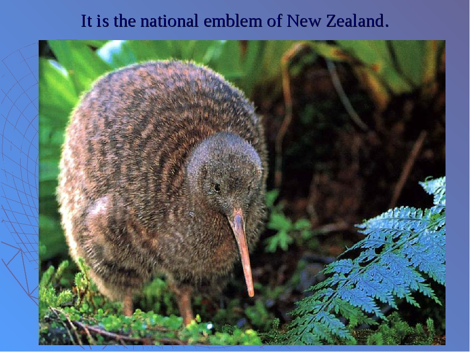 It is the national emblem of New Zealand.