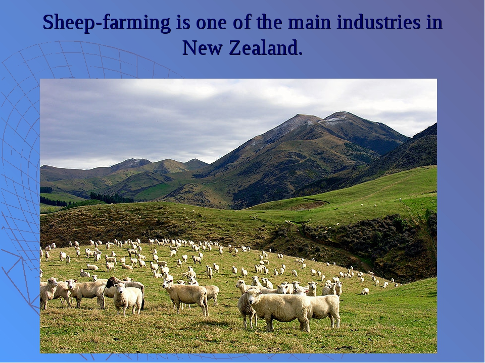 Sheep-farming is one of the main industries in New Zealand.