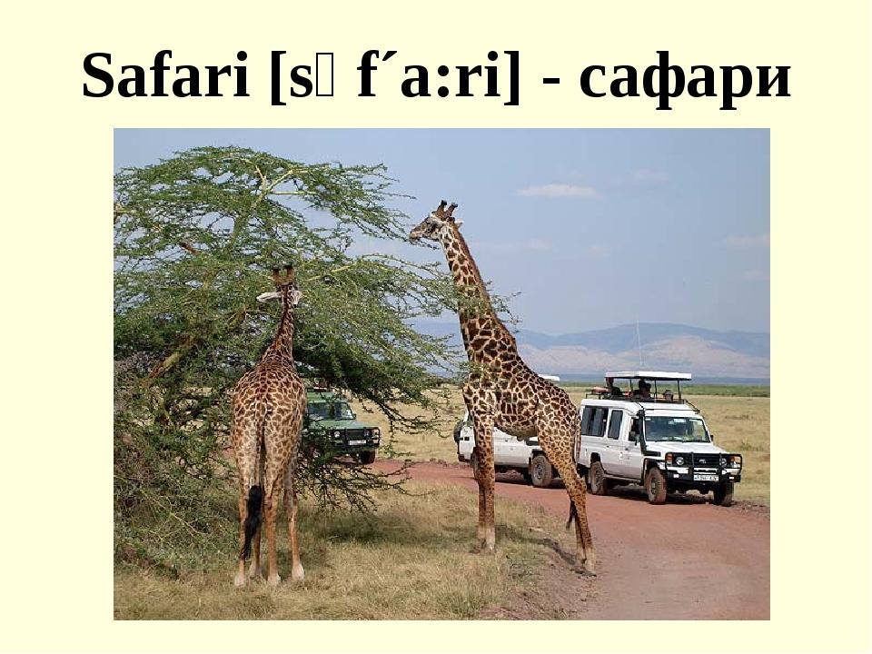Safari [sәf´a:ri] - сафари