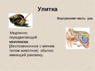 Улитка Медленно передвигающий моллюска (беспозвоночное с мягким телом животно