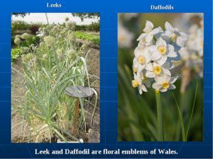 Leeks Daffodils Leek and Daffodil are floral emblems of Wales.