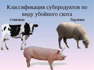 Классификация субпродуктов по виду убойного скота говяжьи бараньи свиные