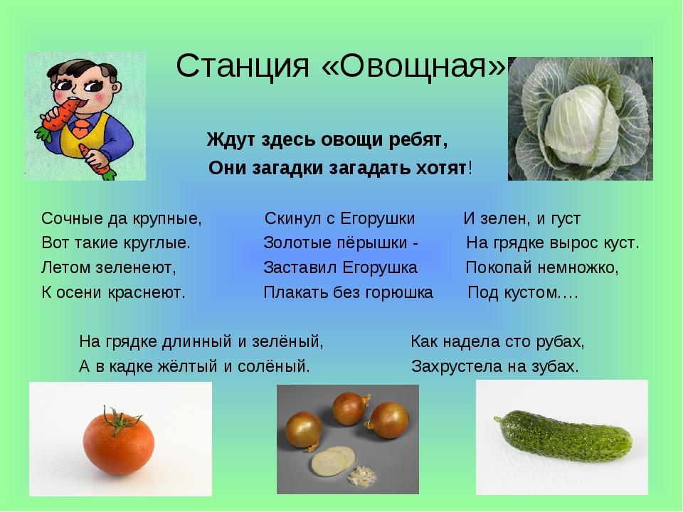 Станция «Овощная» Ждут здесь овощи ребят, Они загадки загадать хотят! Сочные...