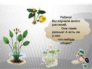 Ребята! Выизучили много растений. Они такие разные! Аестьли уних что-нибу