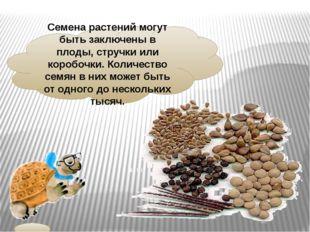 Семена растений могут быть заключены в плоды, стручки или коробочки. Количест