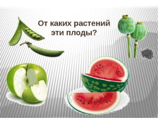 От каких растений эти плоды?