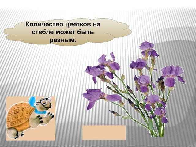 Количество цветков на стебле может быть разным.