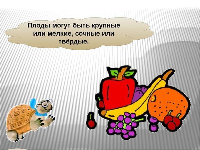 Плоды могут быть крупные или мелкие, сочные или твёрдые.