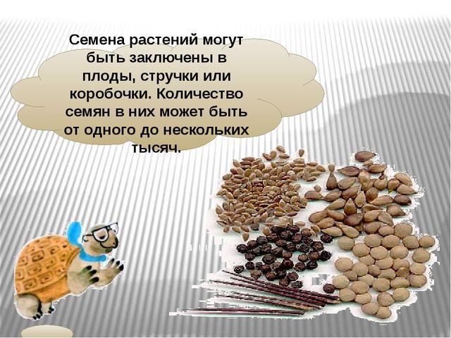 Семена растений могут быть заключены в плоды, стручки или коробочки. Количест...