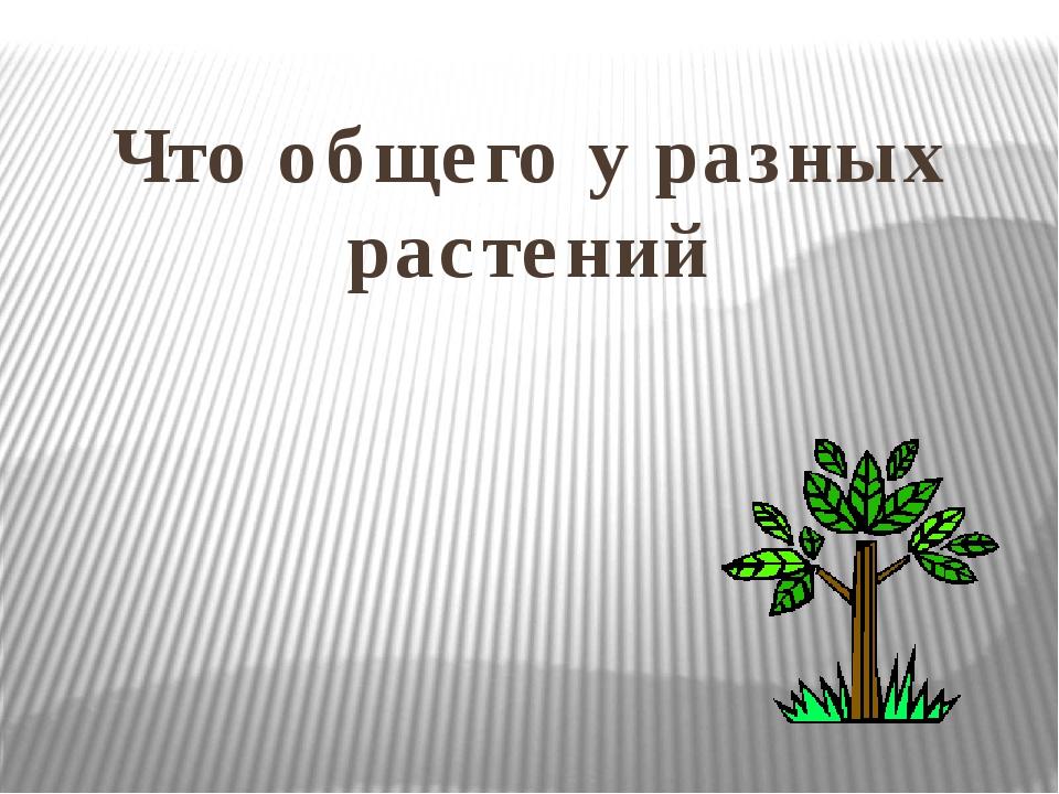 Что общего у разных растений