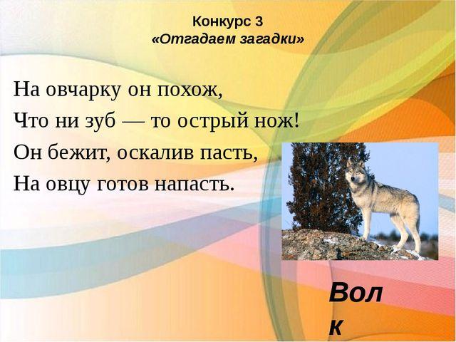 Конкурс 3 «Отгадаем загадки» На овчарку он похож, Что ни зуб — то острый нож!...