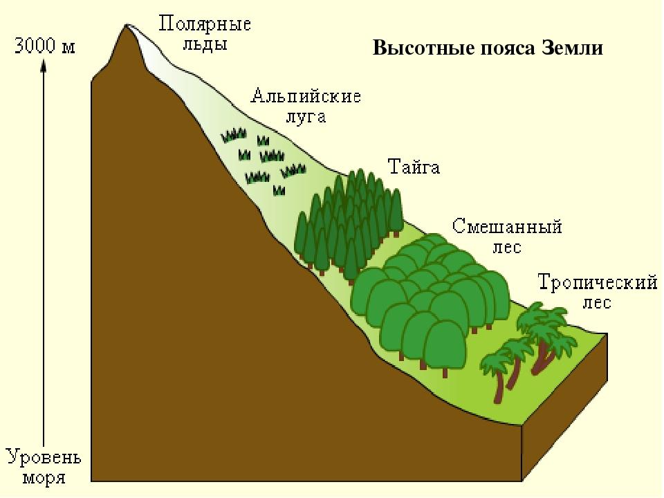 Высотные пояса Земли