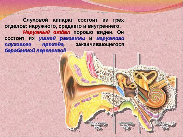 Слуховой аппарат состоит из трех отделов: наружного, среднего и внутреннего....