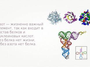 Азот — жизненно важный элемент, так как входит в состав белков и нуклеиновых
