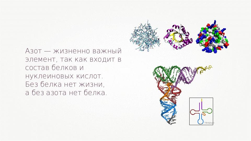 Азот — жизненно важный элемент, так как входит в состав белков и нуклеиновых...